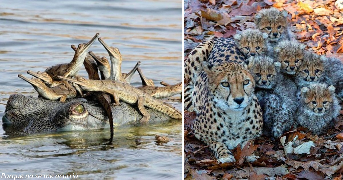 25 трогательных фото: мама - она и в Африке мама