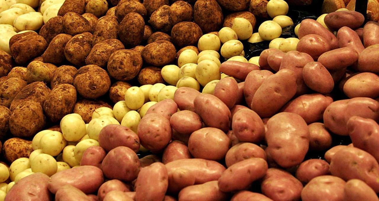 Скоро весна,а ты выбрал для себя лучший и урожайный сорт картофеля?