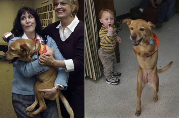Животные -инвалиды: «Мы тоже…