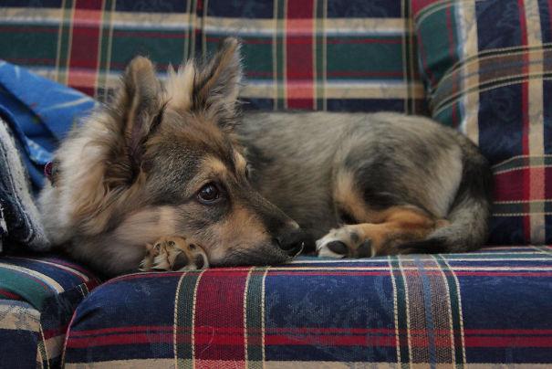 Однажды внимание карли привлекла собака-инвалид и она заинтересовалась темой животных с ограниченными возможностями