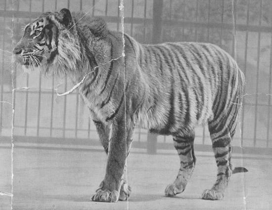 8 видов исчезнувших животных