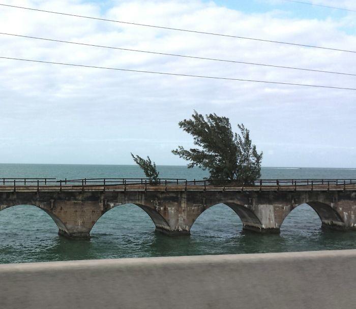 Заброшенный мост дерево, живучесть, жизнь, мир, планета, растительность, фото