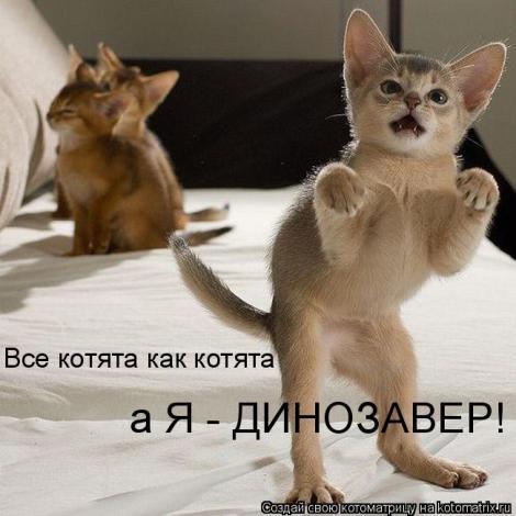 смешные фото с маленькими котятами