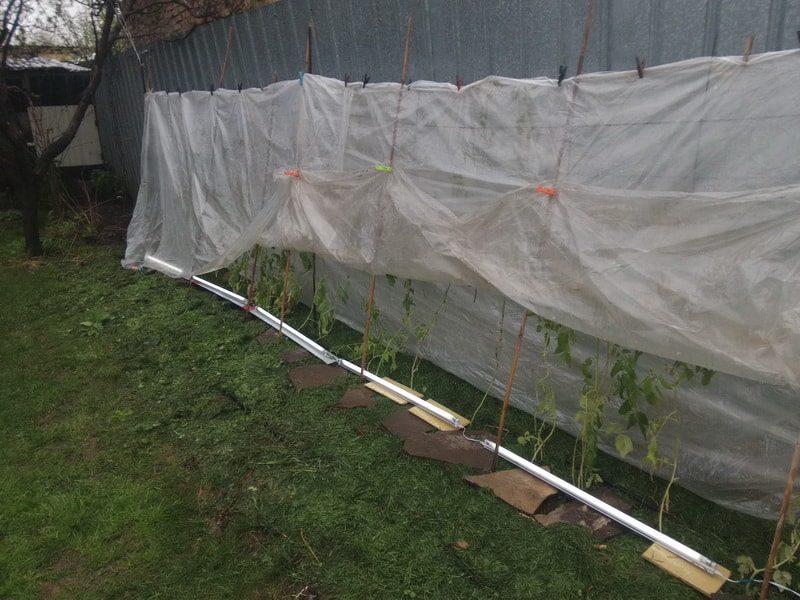 защита рассады от заморозков в мае