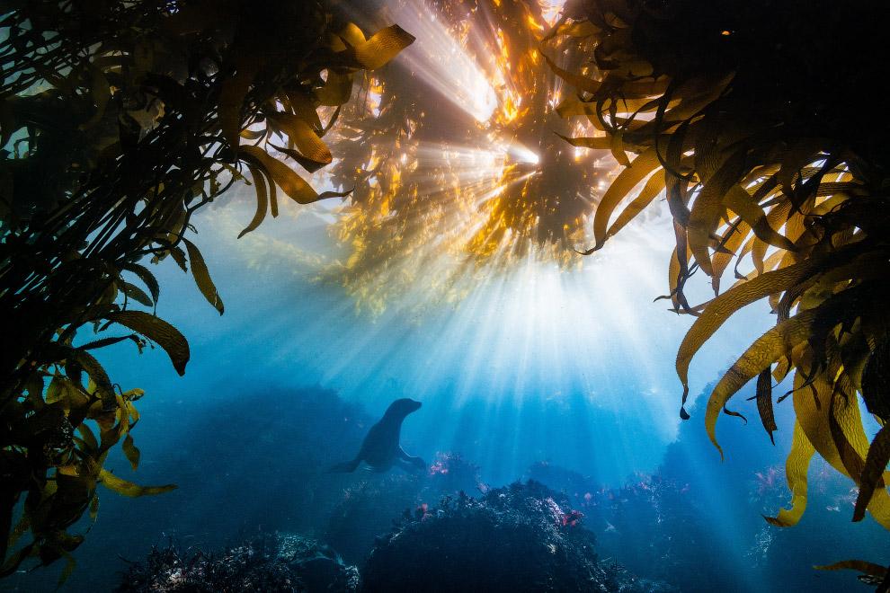 Подводные фотографии с конкурса Ocean Art 2018