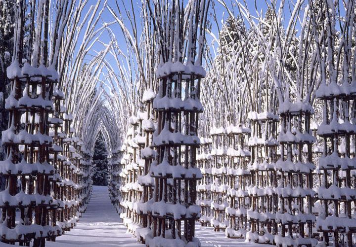собор из деревьев джулиано маури (8)