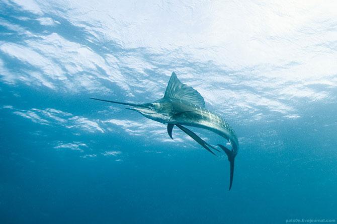 Потрясающие подводные фотографии Александра Сафонова
