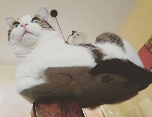 Стеклянные столы и коты с не…