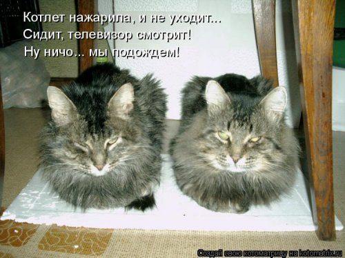 Смешные котоматрицы, которые поднимут вам настроение на весь день)