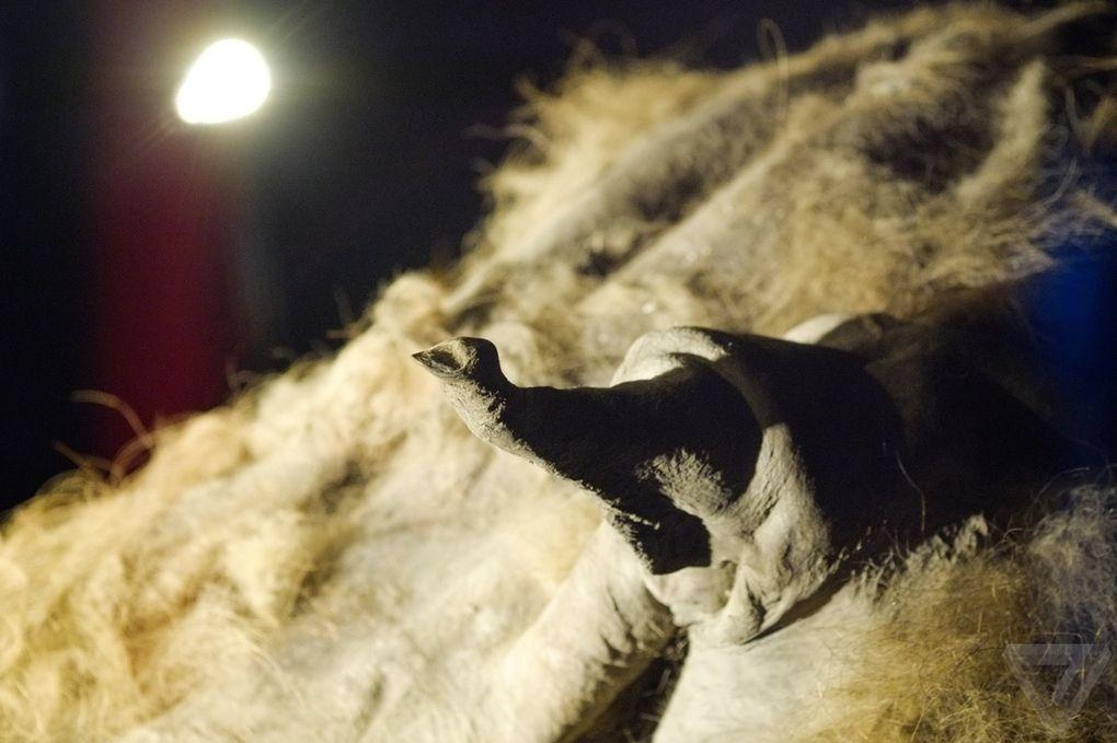 Yuka08 Самый известный мамонт из Якутии: Юка