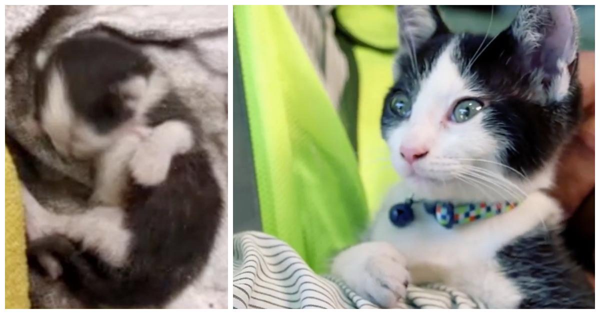 «Скукожился тряпочкой…» Котёнка, застрявшего в грузовике с отходами, спасли и усыновили!)