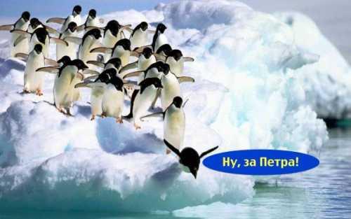 Пингвины Антарктиды – за Порошенко