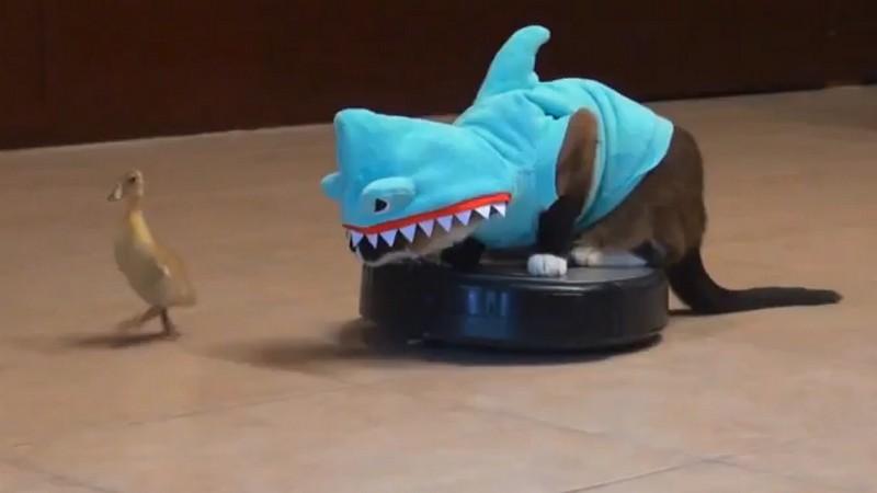 Укротит робот-пылесос, нарядившись в костюм акулы (все коты делают это!).