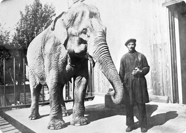 Ленинградский зоопарк во время блокады