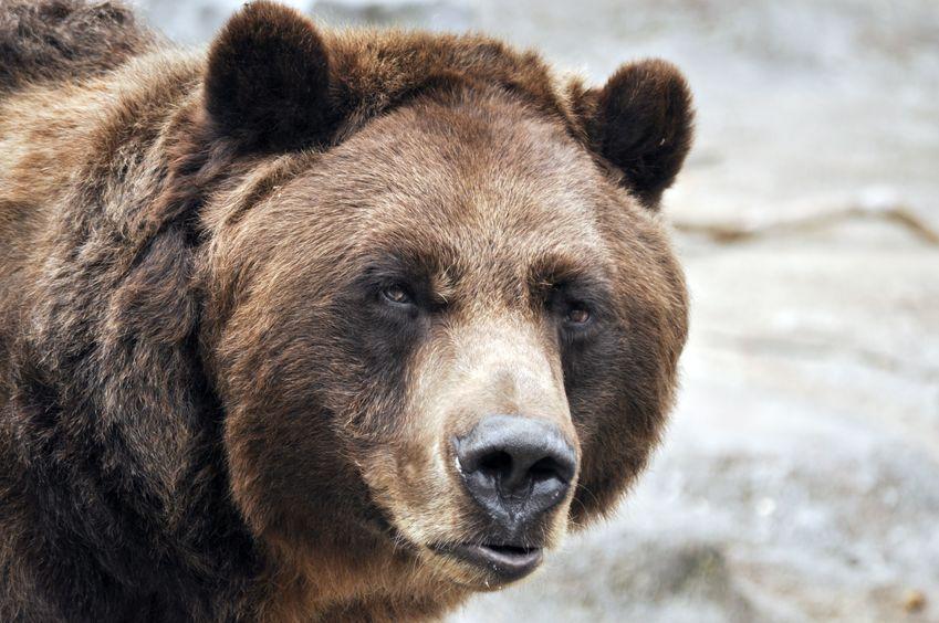Медведь устроил берлогу прям…