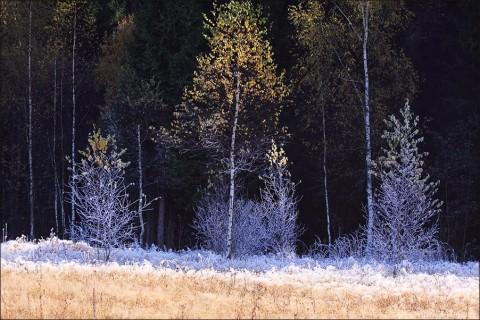 Осенний позитив: серебро золотой осенью в солнечный день