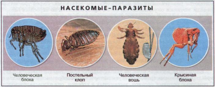 Животные паразиты (2)