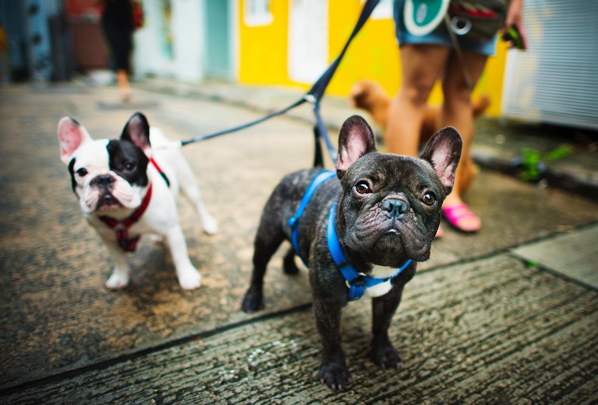 МВД сократило список особо опасных пород собак до 13 пунктов