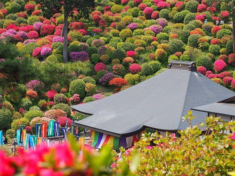 Азалии храма Офуна Каннон места, путешествия, природа