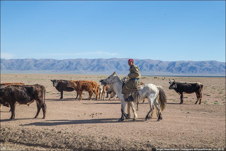 Монгольские телочки