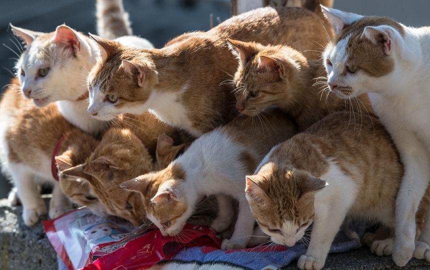 В Краснодаре неизвестный вышвырнул около 10 кошек из окна 4-го этажа