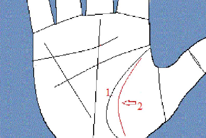 1 линия на руке, говорящая, …