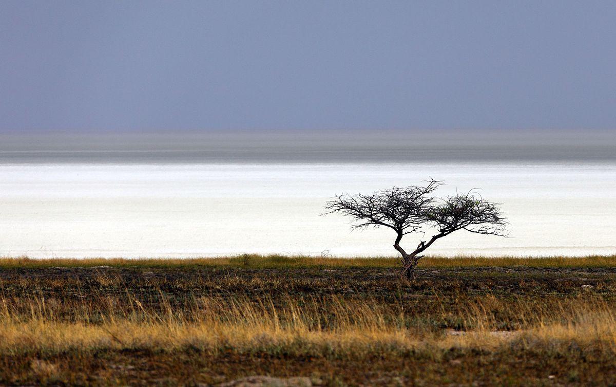 Этоша (Etosha Pan), Намибия