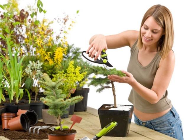 8 золотых правил по уходу за комнатными растениями