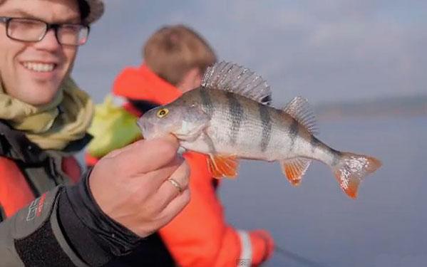 видео осенняя рыбалка хищник