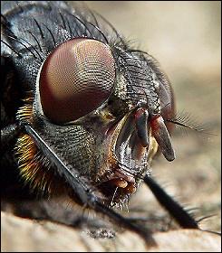 Портреты жуков (Макрофотографирование насекомых).