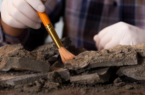 В Белоруссии нашли дом дружинника X века