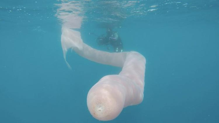 У берегов Новой Зеландии два дайвера столкнулись с химерным 8-метровым морским «червяком»