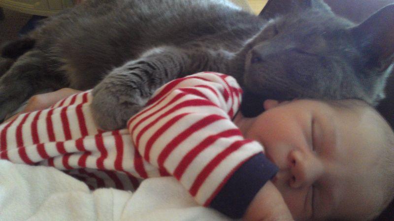 CatsGoldenHearts19 Почему мы любим кошек
