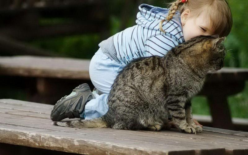 kitties04 30 способов использования котов в хозяйстве