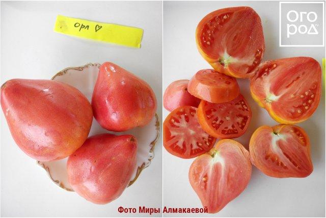 11 лучших сортов томатов для…