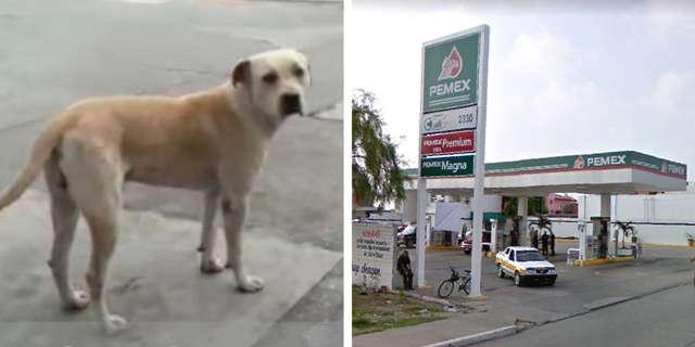 Тощий бродячий щенок пришел на заправку… Люди помогли ему, и через 2 года он их отблагодарил