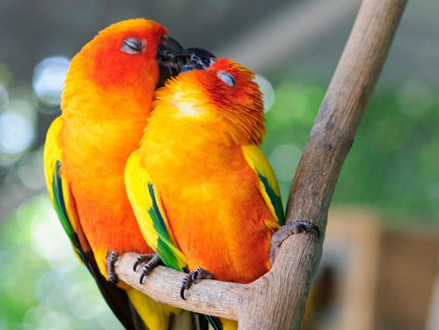 -Животные тоже целуются и делают это восхитительно