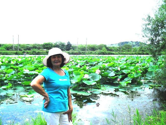 Цветение лотоса в Приморье