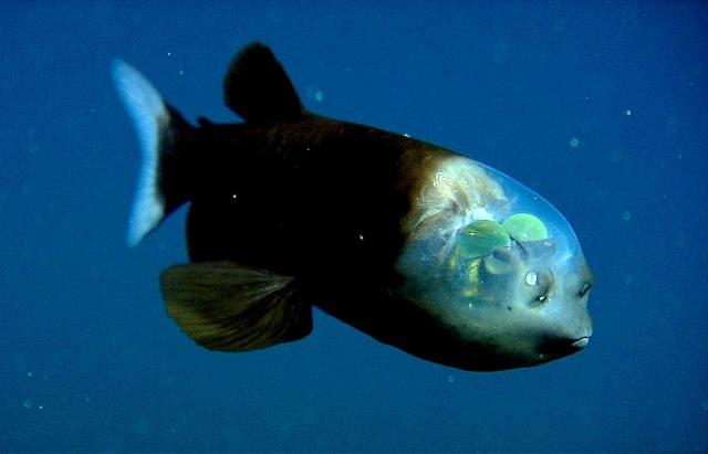 10 удивительных прозрачных животных