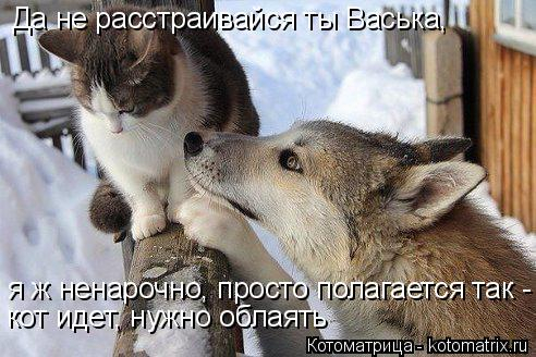 kotomatritsa_c (1) (492x328, 194Kb)