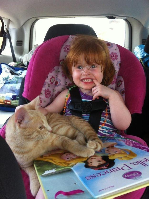 CatsGoldenHearts32 Почему мы любим кошек