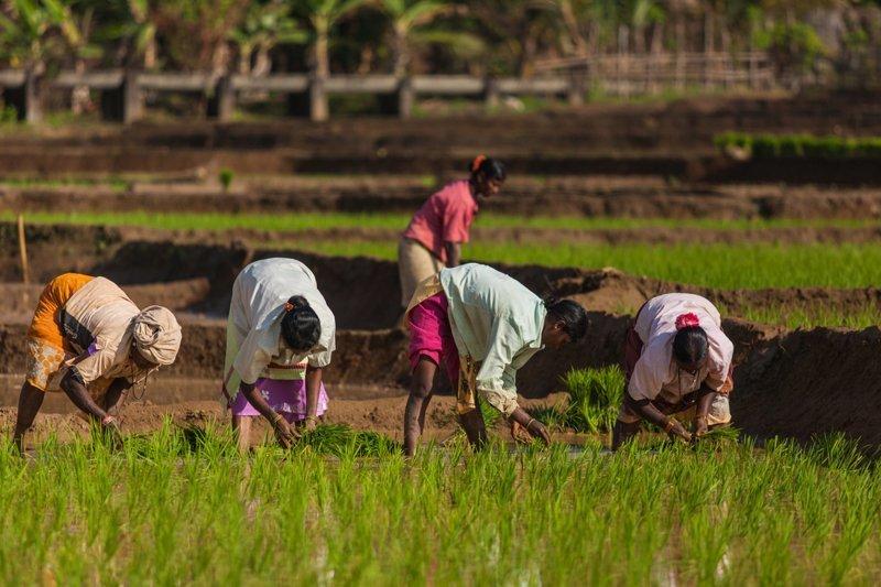 12. Женщины индия, рабство, традиции, факты, фото, шок
