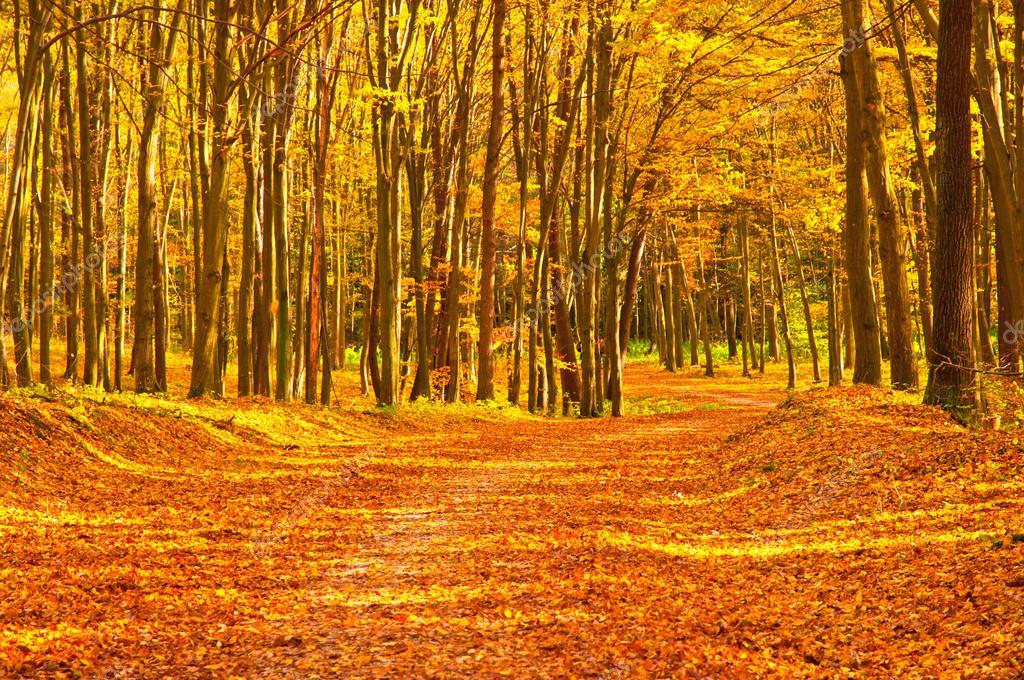 Картинки по запросу золотая осень в лесу