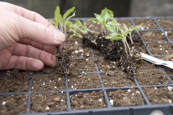 Скорая помощь рассаде