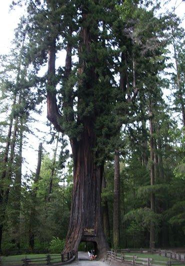 Деревья, которые удивляют: Рис.6