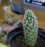 Как подобрать растения для комнаты