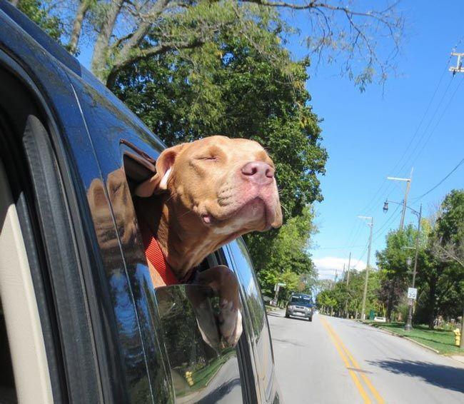 Счастливые морды спасенных из приюта собак