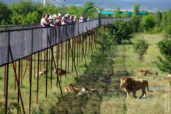 Ситуация с крымским парком л…