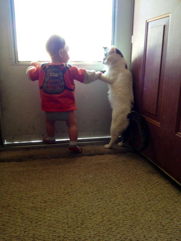 CatsGoldenHearts31 Почему мы любим кошек