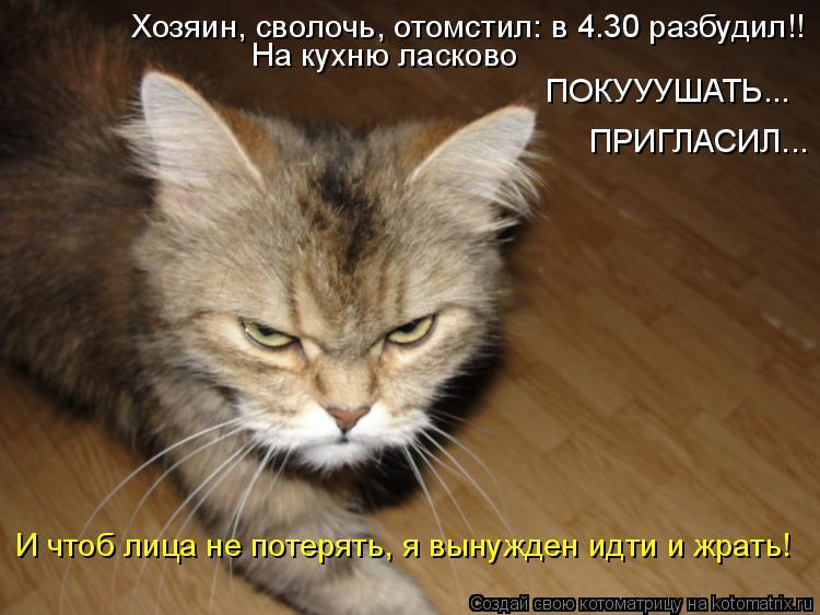 Котоматрица: Хозяин, сволочь, отомстил: в 4.30 разбудил!! На кухню ласково ПОКУУУШАТЬ... ПРИГЛАСИЛ... И чтоб лица не потерять, я вынужден идти и жрать!